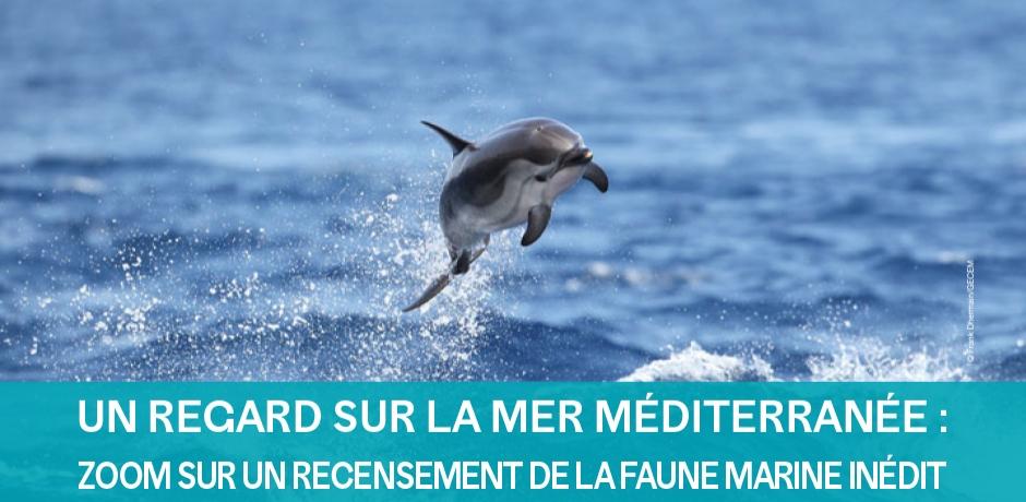 Un recensement inédit de la faune en méditerranée.