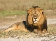 Le business des safaris en Afrique