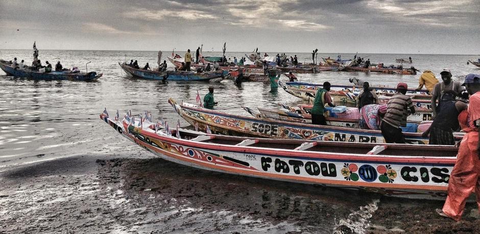 La pêche au poulpe au Sénégal