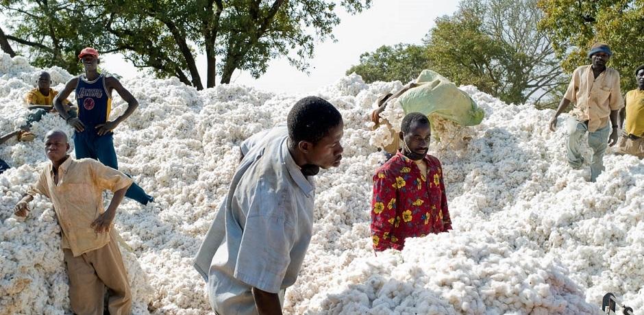 Le coton burkinabè en difficulté