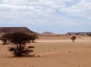 La lutte contre la désertification au Maroc