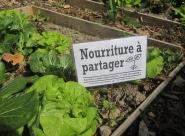 Les jeunes pousses des Incroyables Comestibles Maroc