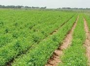 Cap sur l'agriculture biologique!
