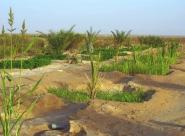 L'agriculture climato Intelligente