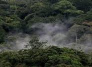 Le congrès forestier mondial de Durban, enjeux et conclusion