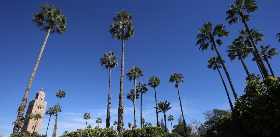 Marrakech: dynamique écologique avant la COP 22