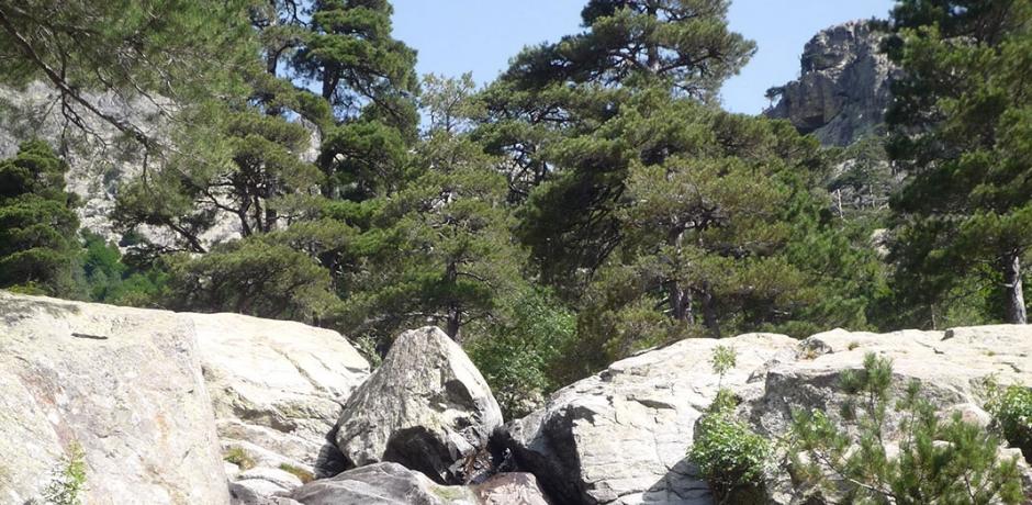 La journée internationale des forêts!
