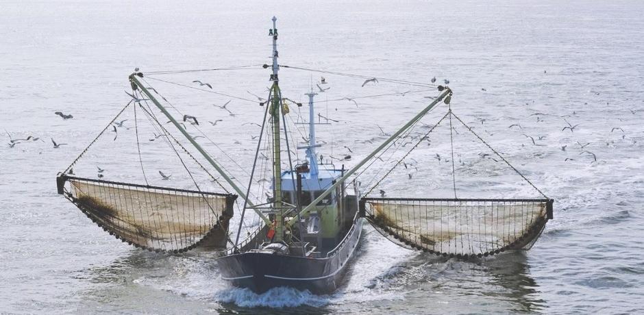Vers une interdiction totale de la pêche électrique en Europe
