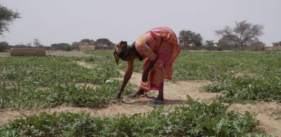 Muraille verte : ça avance au Sénégal!